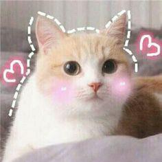 Pin by Kiwi Krush on Blushie Cats Cute Cat Memes, Cute Love Memes, Funny Cats, Funny Memes, Cute Kittens, Cats And Kittens, I Love Cats, Crazy Cats, Cat Icon