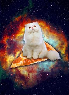 Space, cat, pizza. Quite possibly the greatest gif ever created.