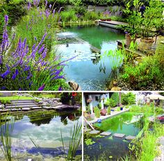 Plants-filtered pools. I especially love the one on the bottom right with the stepping stones up to the front door.