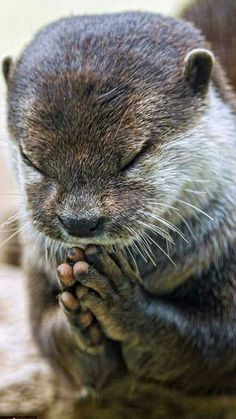 Thank you God for making me an otter. Everyone loves me.