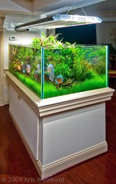 Aquarium Photo Gallery......beautiful discus tank