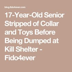 17-Year-Old Senior Stripped of Collar and Toys Before Being Dumped at Kill Shelter - Fido4ever