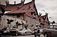 Flying. Photo courtesy of Blueman Teh.