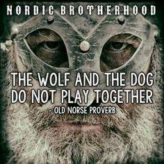 """""""O lobo e o cachorro não brincam juntos."""" - antigo proverbio Nórdico."""