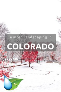 backyard design – Gardening Tips Colorado Landscaping, Residential Landscaping, Colorado Winter, Lawn Care, Winter Months, Number One, Gardening Tips, Landscape Design, I Can