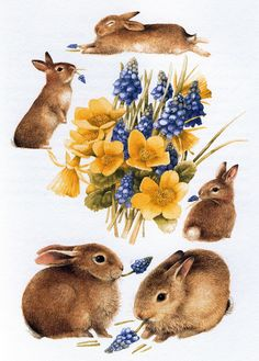Artist ~ Marjolein Bastin - Spring Rabbits from 'Nature Sketches' Art And Illustration, Lapin Art, Marjolein Bastin, Art Carte, Motifs Animal, Nature Sketch, Nature Artists, Rabbit Art, Bunny Art