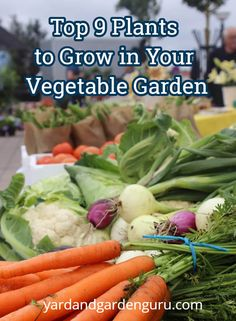 Looking to grow vegetables in your garden? Well here are the best ones to get growin'