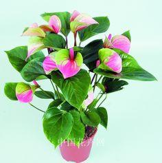 Aliexpress.com: Comprar 120 unids flores raras Anthurium semillas balcón planta en maceta Anthurium semillas de flores para el jardín de DIY de semillas dulces fiable proveedores en Hokkaido Exotic