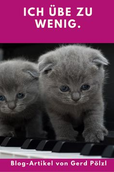 Wenn du jeden Tag mit Freude und guten Resultaten übst, dann sind die folgenden Worte nicht für dich. Cats, Blog, Animals, Playing Guitar, Musical Instruments, Glee, Studying, Gatos, Animales