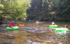 New River State Park in Boone Area, nc.  Tube down the river!