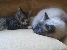 Dylan & Michi