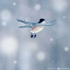 Little Feet - blank photo greeting card of little chickadee flying away in…