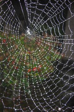 Spider web by Marcelo Tourne, via Flickr