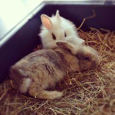 Lazy rabbits ;)