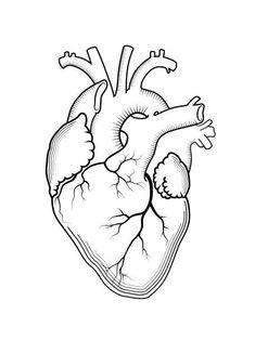 Arte Vectorial Anatómicos Corazón De Vector Estilo Vintage
