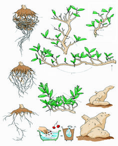 A page from Bonsai Today issue 96 that's titled 'Transplanting and Pruning.' f | Bonsai Bark