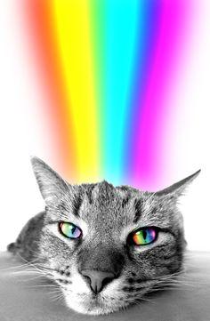 Lovey cats and beautiful rainbows make an intoxicating combination. #catsandrainbows #cats #meowowow