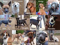 Acworth Petco Adoptions Dog Doctor Petco Adoption