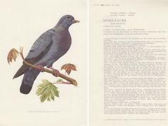 Hey, diesen tollen Etsy-Artikel fand ich bei https://www.etsy.com/de/listing/462735231/vintage-vogelbild-tierposter-zeichnung