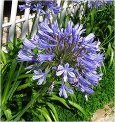 Szerelemvirág - Növények gondozása Flowers, Plants, Wedding, Beautiful Roses, Ballet Flats, Gardening, Random, Balcony, Valentines Day Weddings