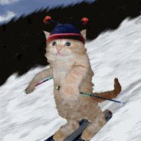 Browse Popular pictures, photos, images, GIFs, and videos on Photobucket Funny Cat Videos, Funny Cats, Funny Ski, I Love Cats, Cool Cats, Photo Ski, Mundo Gif, Kitty Games, Photo Chat