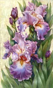 Iris Splender By Kathwren Jenkins