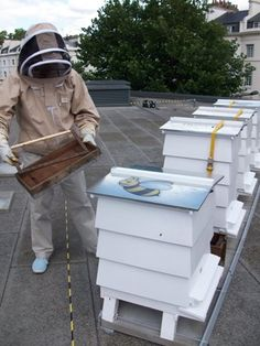 Lancaster Hotel in Londra e un pionere dell'apicoltura urbana. Come in tanti altri alberghi apicoltori, il suo miele viene usato nella cucina del restaurante e offerto come regalo ai ospiti. L'albergo ospità anche l'evento annuale London Honey Show.