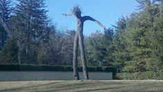 Арбоскульптура (Pooktre) - искусство управлять формой растущих деревьев