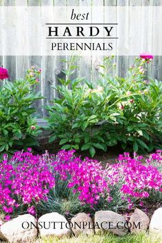 List of the best hardy perennials from a DIY gardener. Anyone can grow these!