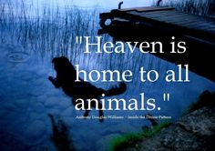 When Jesus comes again we'll see all our animals who have gone to be with Jesus in heaven.If your pet is on the way to the rainbow bridge always remember Jesus will take very very VERY good care of them:)