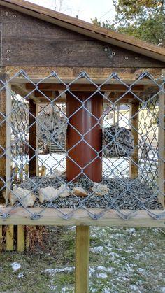 Frømater til fugler, med hjemmelaget meiseboller