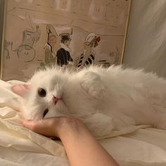 Cute Kittens, Cute Baby Cats, Cute Little Animals, Cute Funny Animals, Cats And Kittens, Cute Babies, Funny Cats, Bb Chat, Photo Chat