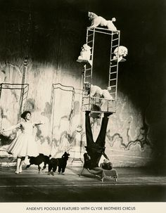 Clyde Bros.Circus Arden's Poodle Act.