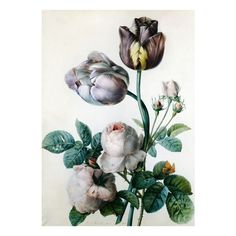 Pinterest ❤ liked on Polyvore featuring flowers, backgrounds, art, fillers and images