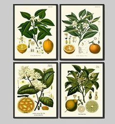 These sets of floral wall decor can be found in sets of two all the way up beyond sets of 12.  Moreover you will see a wide array of botanical wall prints to chose from, ranging from vintage to contemporary.  Meaning there are an abundance to pick from not to mention a plethora of sizes, styles and flower choices.    Lemon Orange Fruit Print Set of 4 Antique Flowers Lemon Lime Orange Home Wall Art Decor Unframed