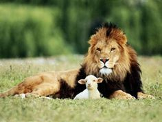 Lion and the Lamb. That will be a great day indeed!