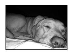 Sleeping nose
