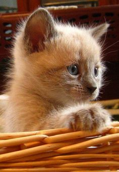 Time for a really cute kitten…..