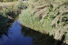 fiume Trigona