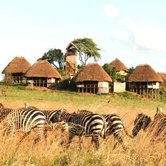 Apoka Lodge, Uganda, Africa - Do an extended safarie thru most of the african countries