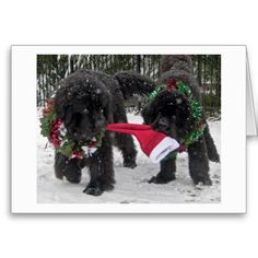 1000+ images about Newfoundland Dog Christmas Cards on ...