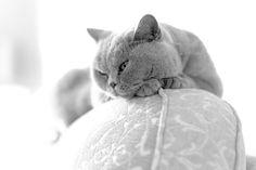 Quiet Contemplation | Flickr - Photo de Colin