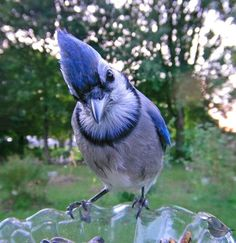 Woman Sets Up A Feeder Cam In Her Yard And The Photos Are Extraordinary (30 New Pics) Funny Expressions, Different Birds, Tiny Bird, Backyard Birds, Bored Panda, Blue Bird, Bird Feeders, Habitats