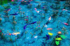 「モネの池」の画像検索結果