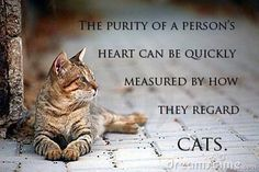 I've always said this. People with better character have a bigger respect for cats.