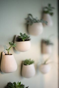 Tillandsias – Annie Hanks Ceramic Studio make up room ideas,make up room studio Tillandsia