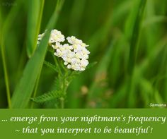 ... emerge from your #nightmare's #frequency ~ that you interpret to be beautiful !