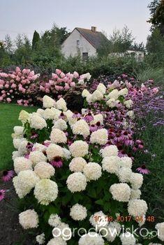 Hydrangea Not Blooming, Hydrangea Garden, Hydrangeas, Outdoor Landscaping, Front Yard Landscaping, Beautiful Flowers Garden, Beautiful Gardens, Hydrangea Varieties, Garden Gadgets