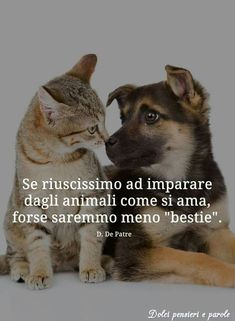 Dog Love, Animals And Pets, Dog Cat, Kitty, Funny, Sign, Sweet, Google, Quotes