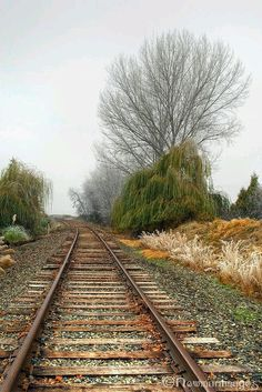 Tracks In Oregon By Train, Train Tracks, Trains, Oregon Trail, Oregon Usa, Ashland Oregon, Train Times, Ferrat, Back Road